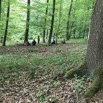 Walderfahrung
